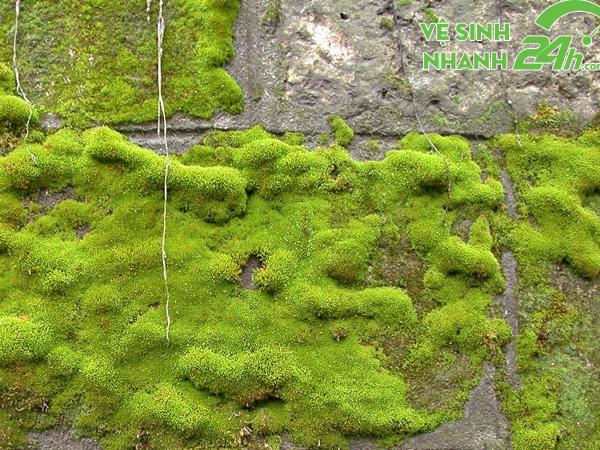 Những nguyên nhân hình thành nên rêu